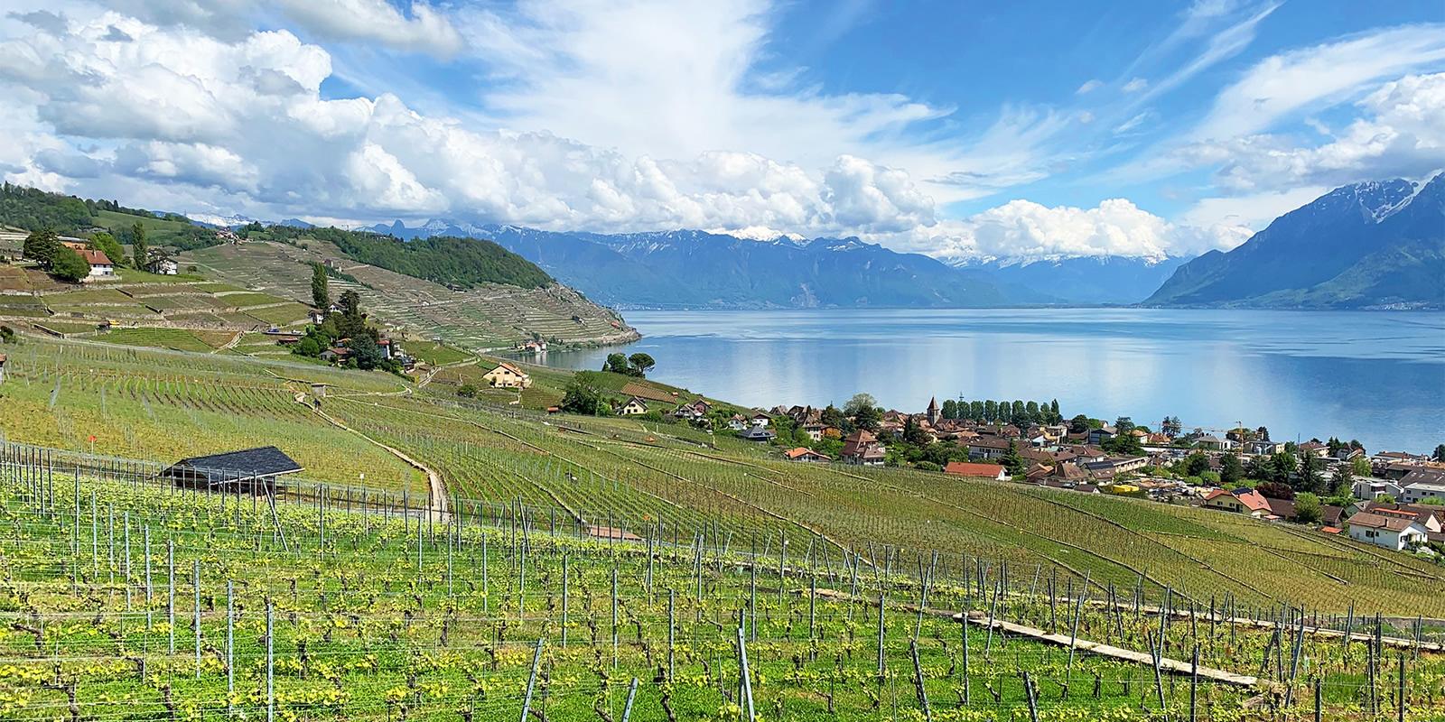 BIKAPA Rando VTT AE Les Vignes de Lavaux